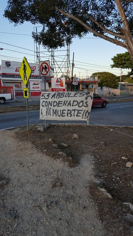 Avenida de los arboles tristes_foto1
